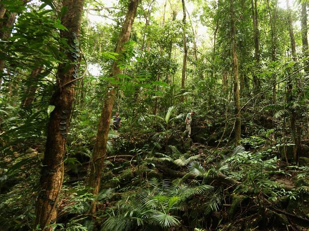 For each 1C rise in temperature, tropical regions now release about 2 billion extra tonnes of carbon-containing gases