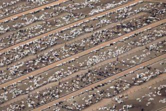 cattleranch