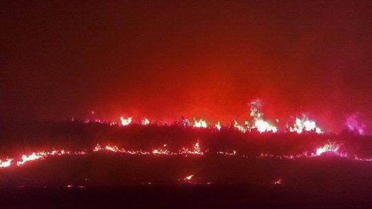 Kurdish forest fire.