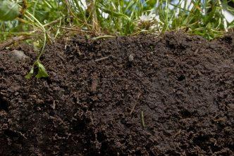 regen_soil