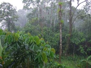 ecuador_rainforest