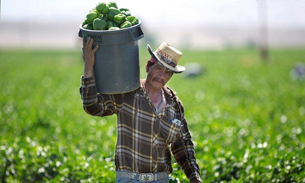 guardian_farmworkers