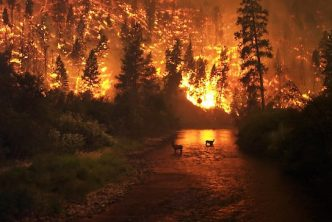 wildfire_590