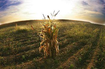 agricultura-cambio-climatico