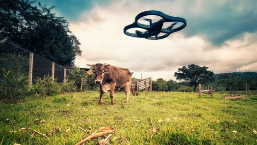 Drone meets cow - Mauricio Lima  (CC BY 2.0)