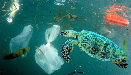 Sea turle swimming amid toxic waste